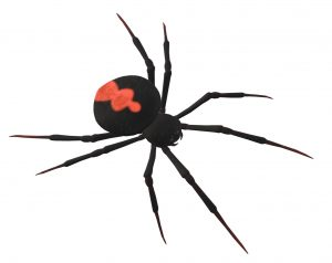 spider-3d-drawing